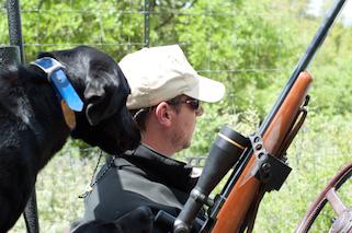 Texas Lab Hunts