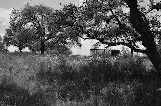 Texas Ranch Hunts